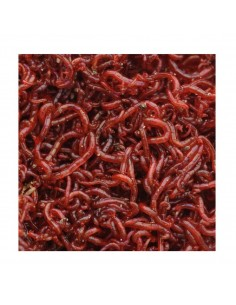 Live Food Bloodworms Small...