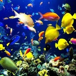 SEA WATER FISH