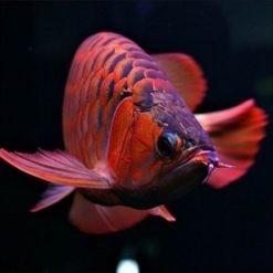 HUNTER FISH